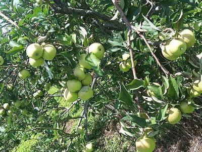 Paket Wisata Bromo Malang 3 Hari 2 Malam Agro Wisata Petik Apel