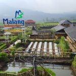 Tempat Wisata di Malang - Cafe Sawah Pujon Kidul