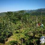 Tempat Wisata di Malang - Petik Apel