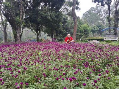 Taman Bunga di Coban Rondo